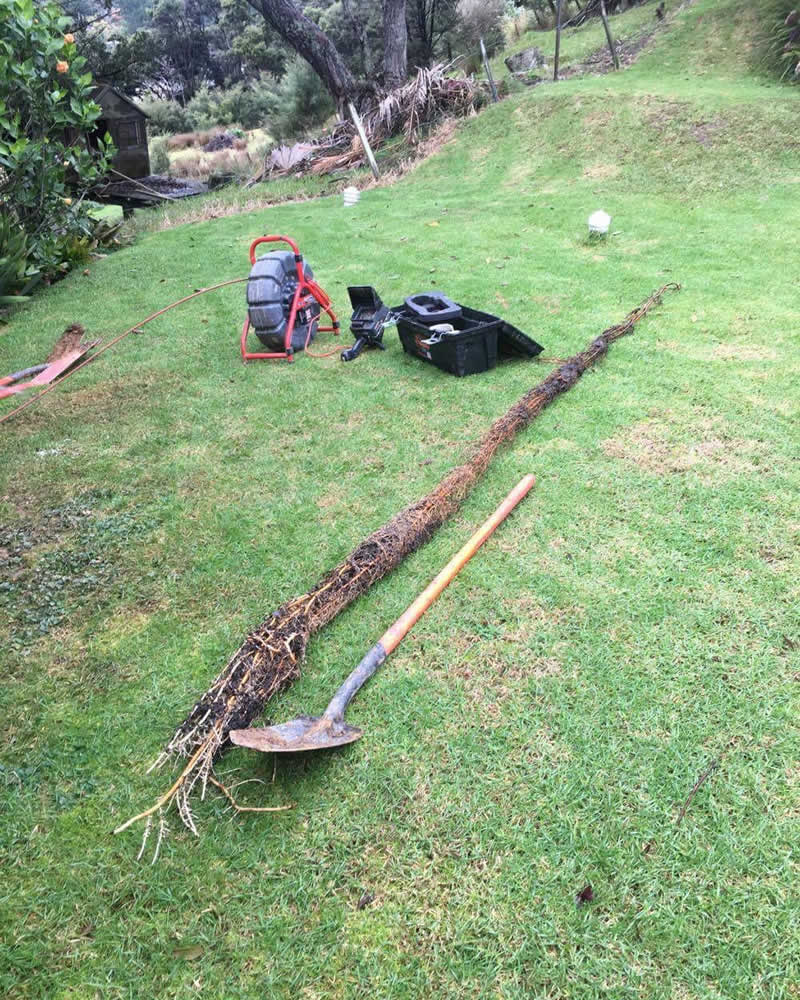 Root cutting tree roots